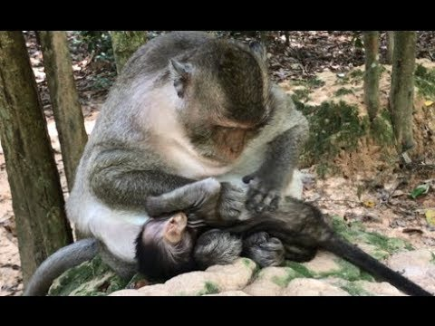 Thumbnail: Pity baby monkey sleep well with mom