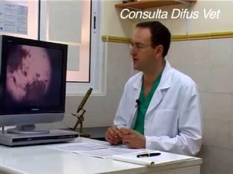 diagnostico-citologico-en-veterinaria,-www.consultavet.org
