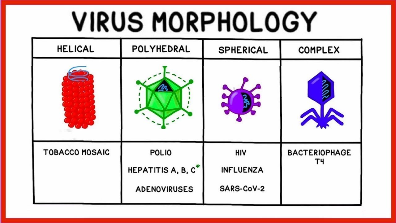 Going Viral: Viruses, Replication and COVID-19