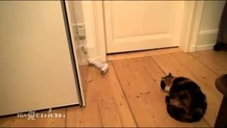 Кот, Ужас, Ржака