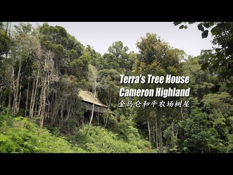 金马仑和平农场树屋 Terra's Tree House, Cameron Highlands