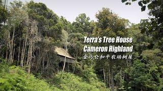 金马仑和平农场树屋 terra s tree house cameron highlands