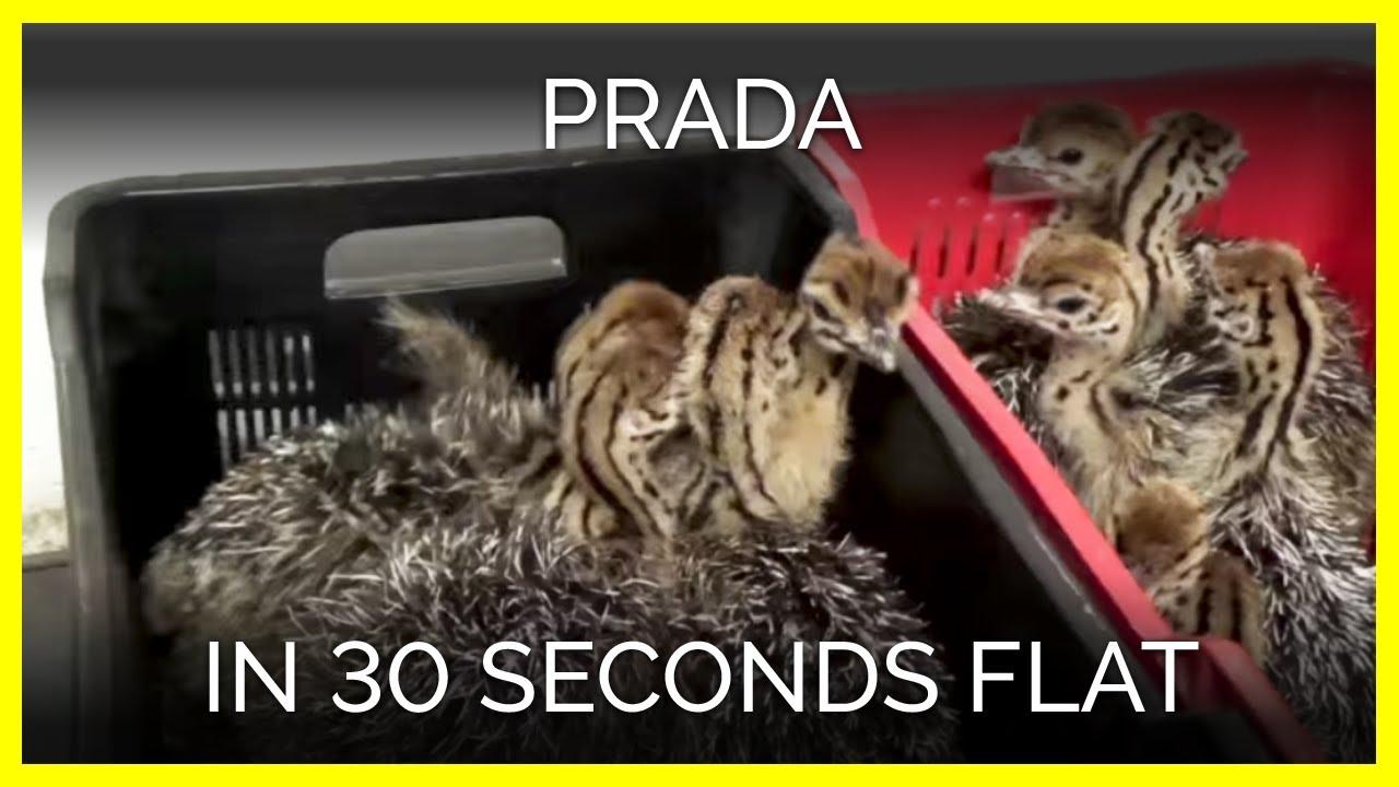 9795773128 Prada in 30 Seconds Flat - YouTube