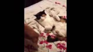 Кот делает миньет у собаки