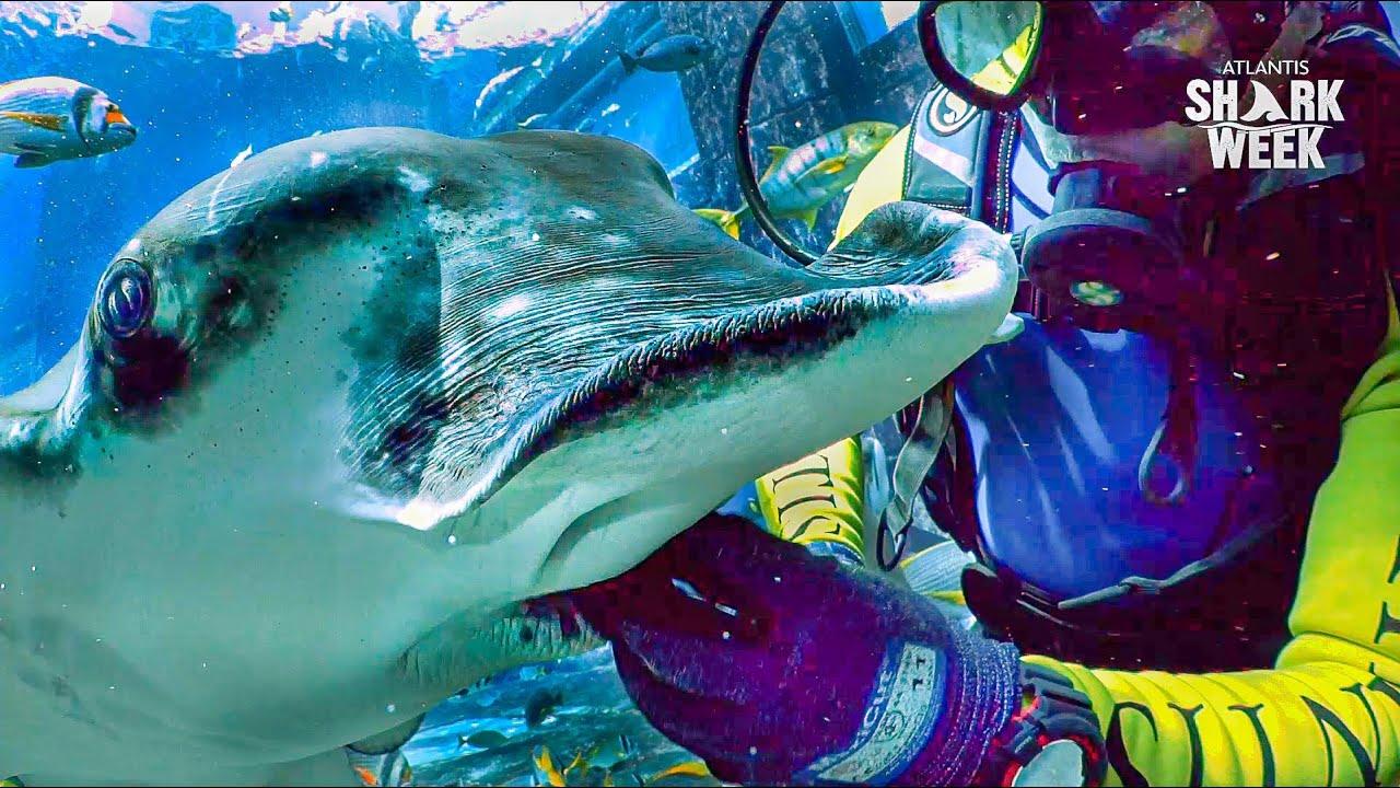 SHARK AND RAY FEEDING IN ATLANTIS AQUARIUM | Sharkweek 2020