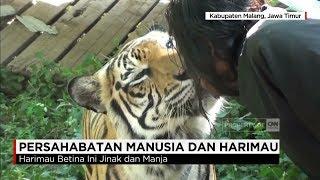 Persahabatan Sejati Antara Santri & Harimau di Malang, Jawa Timur