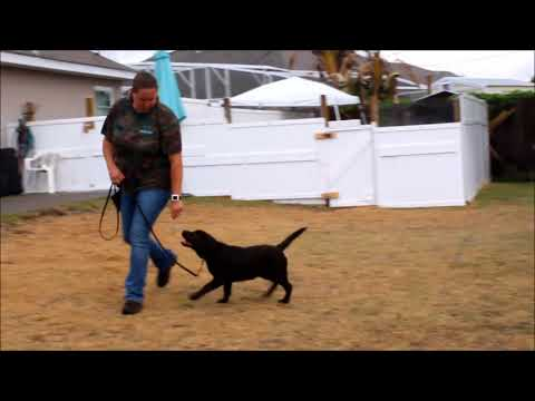 Cocoa 1 week puppy academy update
