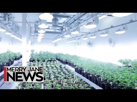 Blaze Boston: Here's an Inside Look at Ermont Dispensary's Grow Operation | MERRY JANE News