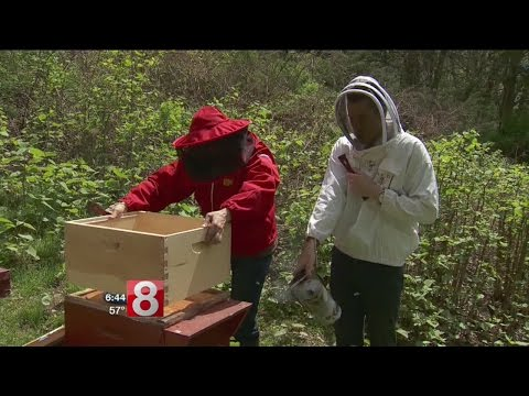 Cruisin' Connecticut – Red Bee Apiary In Weston Is All The Buzz