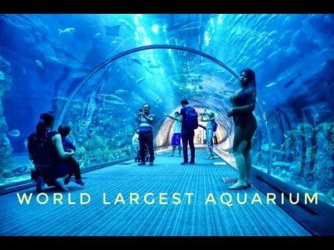Dubai Aquarium-world Largest Aquarium-Guinness World Record 2008