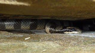 Full of poisoness striped sea snakes: Snake Rock, Ngwe Saung Beach, Myanmar Burma Birma Birmanie