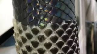 [FULL VIDEO] Python Shedding out is skin