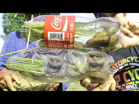 Awesome Ideas Trap Fish Eels Uses Dob(Bottle Plastic) - How To Catch Fish Eels By COCA COLA Bottle
