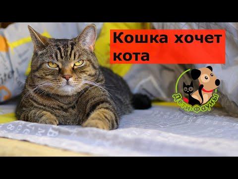 Кошка просит кота что делать в домашних условиях