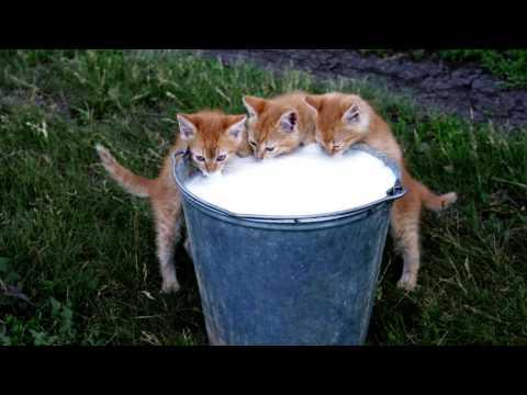 смешные коты -