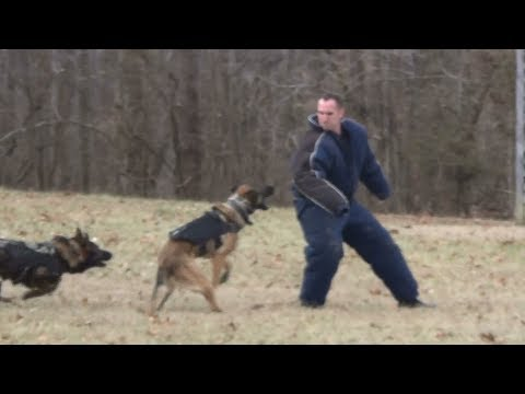 Police K9 Training Patrol Dog Class Video