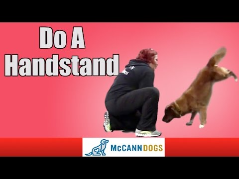 Dog Tricks: Teach Your Dog To Do A Handstand