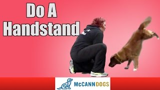 Teach Your Dog To Do A Handstand