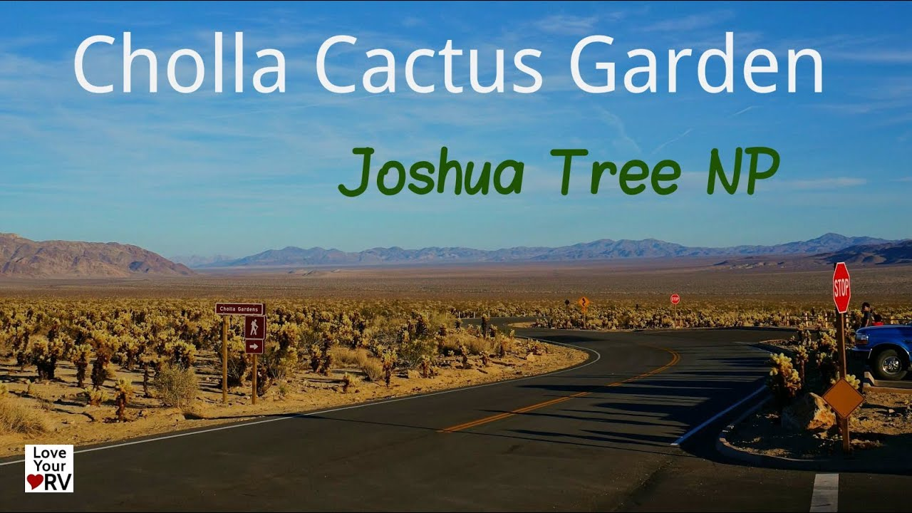 Cholla Cactus Garden In Joshua Tree National Park Youtube