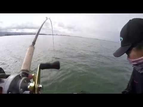 Fishing The Berkeley Flats In SF Bay (savage Battle With A Monster Ray)