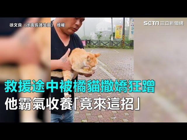 救援途中被橘貓撒嬌狂蹭 他霸氣收養「竟來這招」|三立新聞網SETN.com