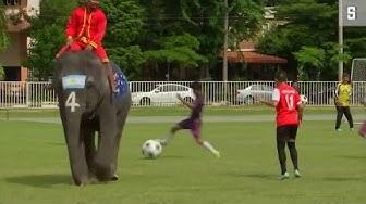 Kampagne gegen illegales Glücksspiel: Fußballspiel gegen Elefanten