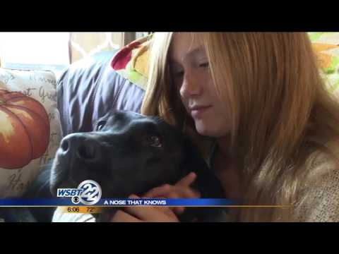 A nose that knows: Diabetic alert dog helps New Paris girl