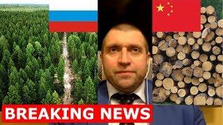 Дмитрий ПОТАПЕНКО - Вырубка лесов китайцами в Сибири