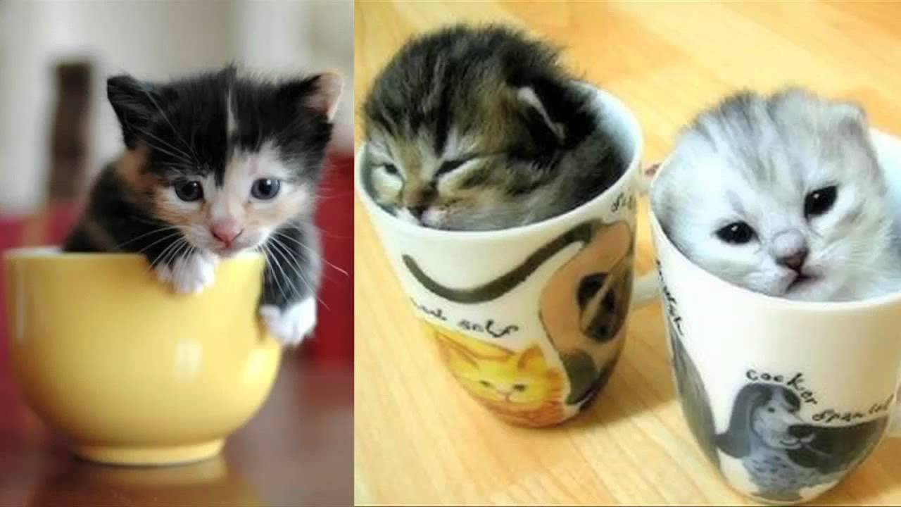 worlds smallest animals cat in a cup auto replay youtube - Smallest Cat In The World Guinness 2013