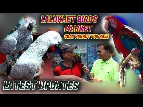 Lalukhet Sunday Birds Market 15-4-2018 Latest Updates (Jamshed Asmi Informative Channel)  Urdu/Hindi