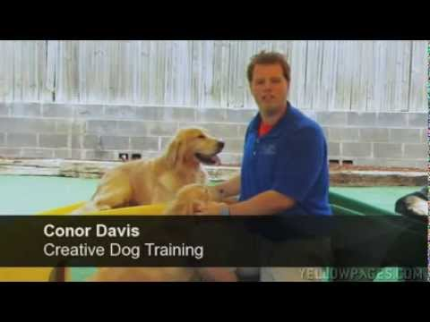 Creative Dog Training Cdt Dog Daycare