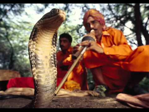 Snake Kobra Song Afghan Version - YouTube.WEBM
