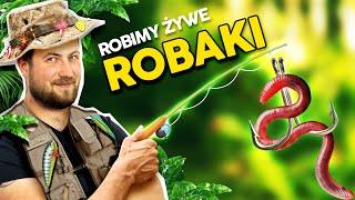 http://tv.ucoz.pl/dir/zrob_to_sam/zrobilismy_farme_robakow_karmimy_dzdzownice_papierem_i_ogryzkami/3-1-0-242