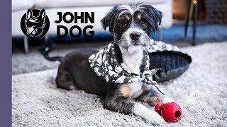 Jak zbudować psu bezpieczny kącik na sylwestra? – TRENING – John Dog