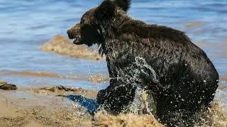 видео Река Амур (бассейн Охотского моря)
