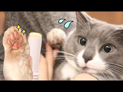 반짝탱글통실한 고양이발 구경하세요 (부작용 주의) | 김메주와고양이들