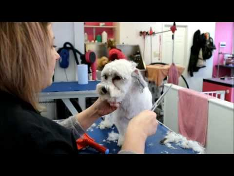 How to do  a Lhasa cross