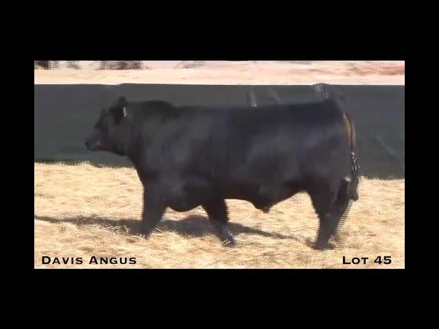 Davis Angus Lot 45