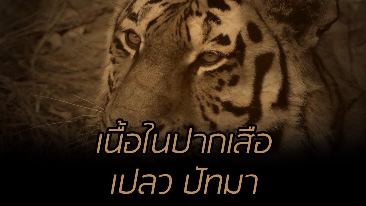 เนื้อในปากเสือ เปลว ปัทมา