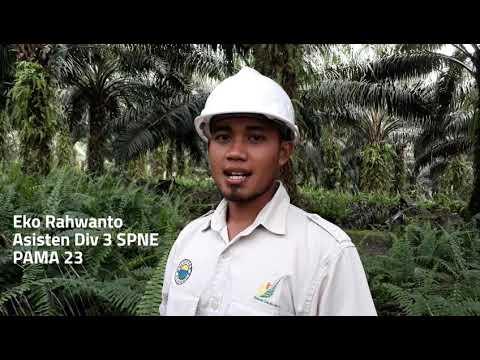 KISAH SUKSES PEMANEN - Karyawan Perkebunan Kelapa Sawit