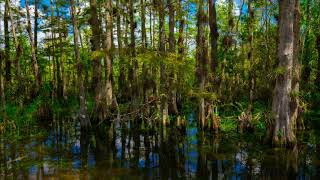 🐸SWAMP AMBIENCE | FROGS Sounds📢1 HOUR ▶️Relax | Sleep | White Noise | ASMR | Mindfulness | Writing