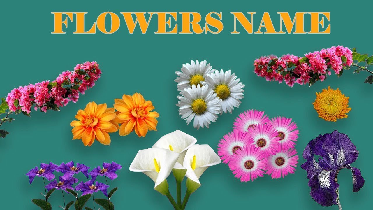Flower Name and Images | List of Flowers | Types of