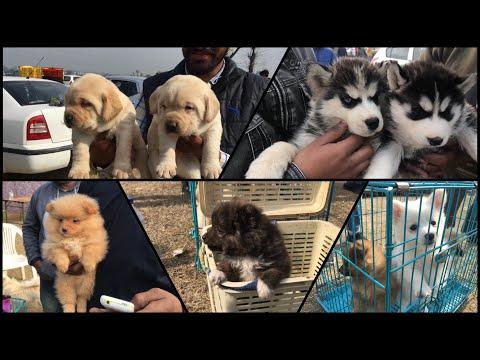 Wholesale Dog Market At Ludhiana Dog Show 27 January 2019