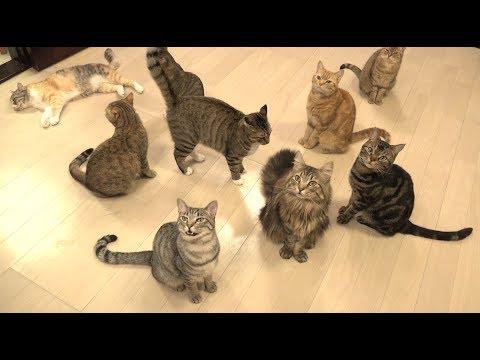 猫の鳴き声 色々♪ みんなでごはん