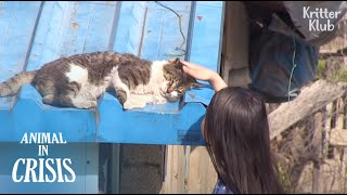 Milagro sucedió a un gato herido por una trampa después de conocer a una chica amable (Parte 2)