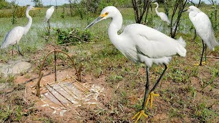 Bird Trap Technology - Awesome Quick Survival Snare Egret Bird Trap Work 100%