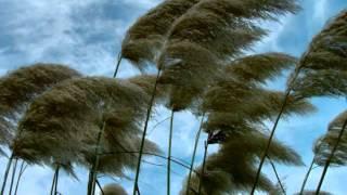 Seals & Crofts  Summer Breeze (Philip Steir Remix)