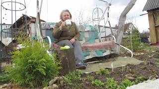 Мой сад в апреле 2018 года! Строю планы по обустройству серебристо-бордовой клумбы!!