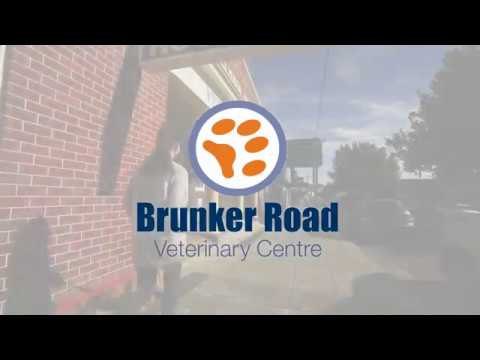 day-surgery-at-brunker-road-veterinary-centre