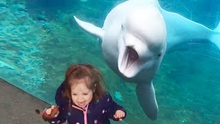 Hilarious Moments When Baby Meets Animal | Funny Baby Videos